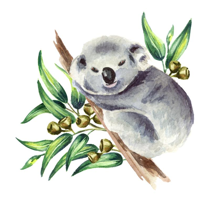 Coala pequena que senta-se no ramo do eucalipto, isolado no fundo branco Ilustração tirada mão da aquarela ilustração royalty free
