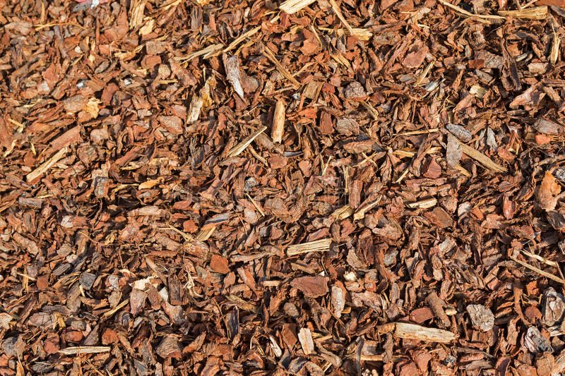 Coarse dried Pine Bark Nuggets ideal for topping garden bed to r. Texture of Coarse dried Pine Bark Nuggets ideal for topping garden bed to retain moisture royalty free stock image