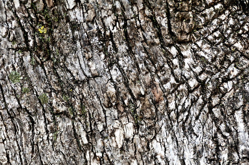 Coarse texture of wood royalty free stock photography