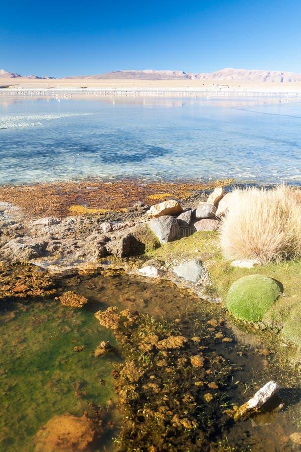 Coast of Laguna Collpa lake in Reserva Nacional de Fauna Andina Eduardo Avaroa protected area, Boliv. Ia royalty free stock photo