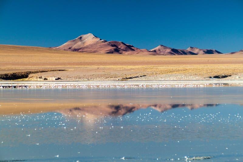 Coast of Laguna Collpa lake in Reserva Nacional de Fauna Andina Eduardo Avaroa protected area, Boliv. Ia royalty free stock photography
