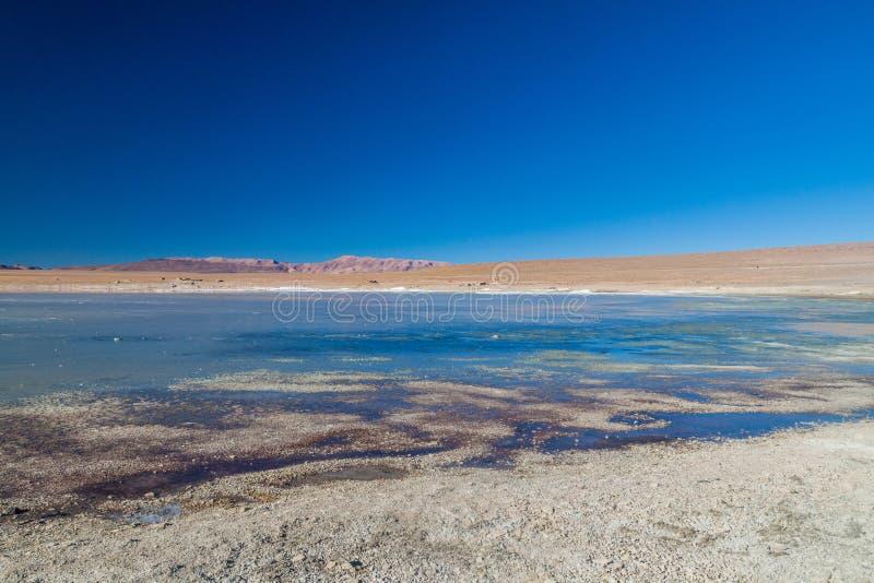 Coast of Laguna Collpa lake in Reserva Nacional de Fauna Andina Eduardo Avaroa protected area, Boliv. Ia royalty free stock image