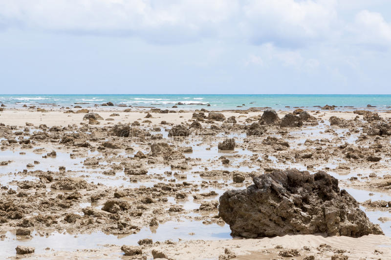 Download Coast at low tide stock photo. Image of nobody, rocks - 24596068