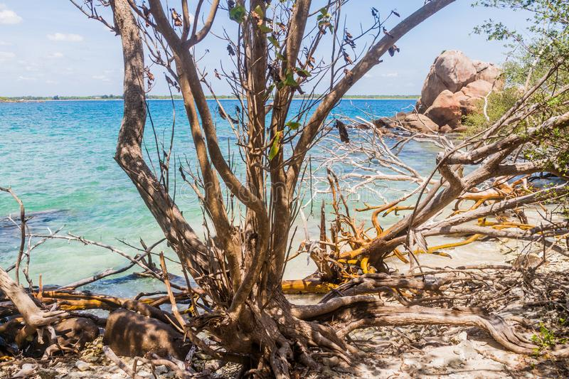 Coast of Pigeon Island near Nilaveli village in Sri Lan. Ka royalty free stock photography