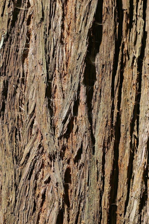 Coast Redwood Tree Bark From Muir Woods Stock Photos