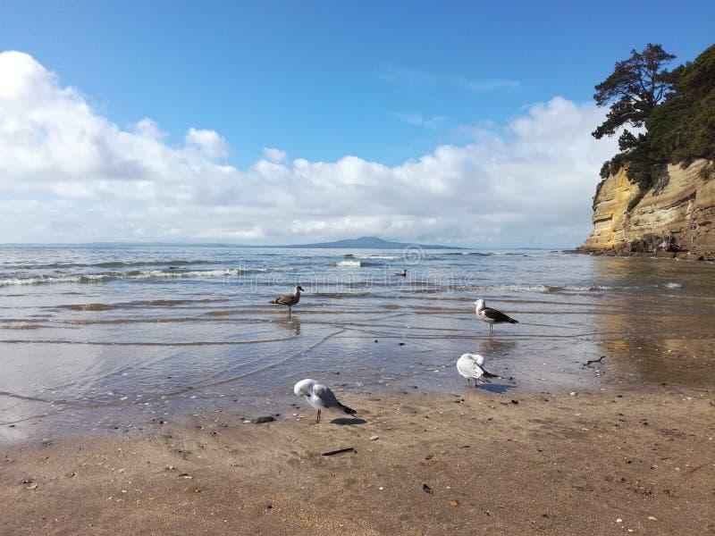Coast, Shore, Sea, Coastal And Oceanic Landforms Free Public Domain Cc0 Image