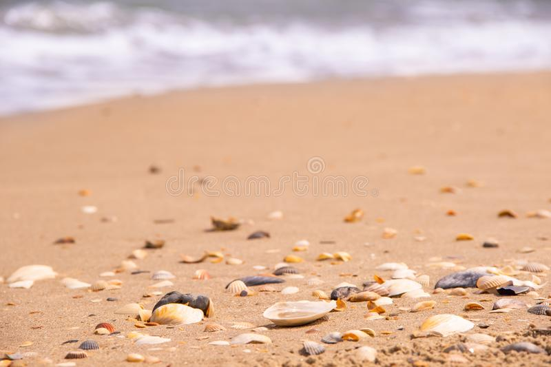 The coast is strewn with shells behind the wavy sea stock images