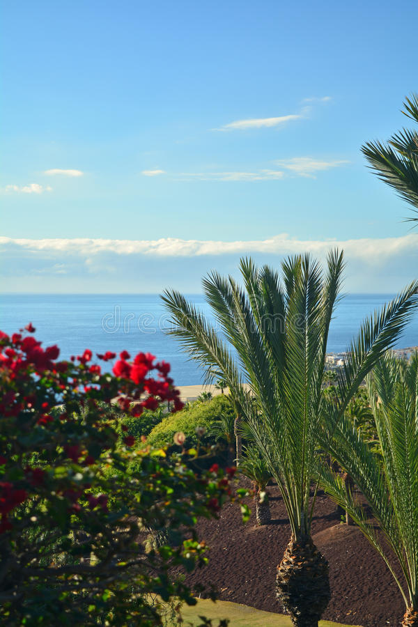 Coast in Tenerife South with tropical garden .Canary Island ,Spain royalty free stock image
