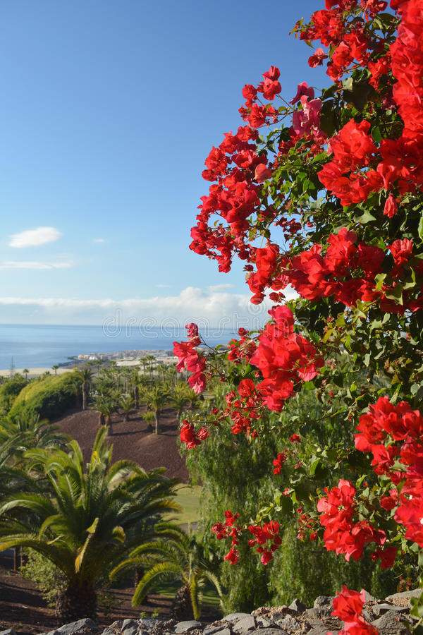 Coast in Tenerife South with tropical plant.Canary Island ,Spain stock photos