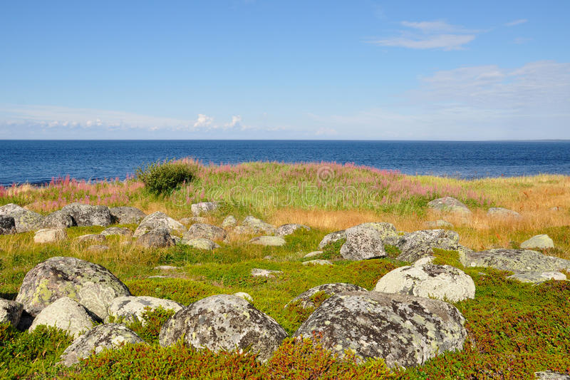 Coast of the White Sea and tundra vegetation on the Bolshoi Island Zayatsky Solovetsky Archipelago. Russia stock photography