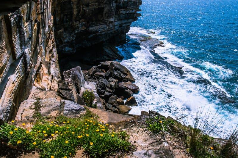 Coastal cliff. In Watsons Bay, Sydney, Australia royalty free stock image