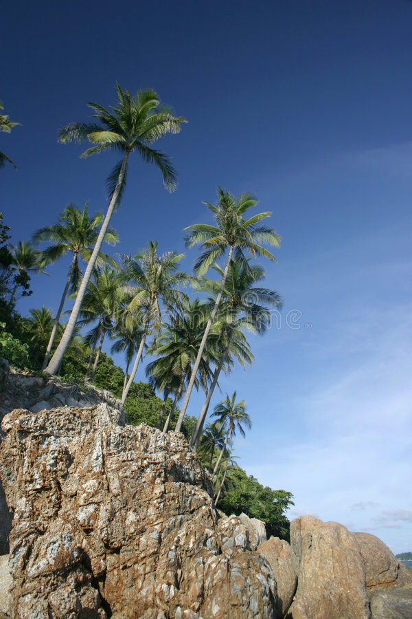 Coastal coconut trees royalty free stock images