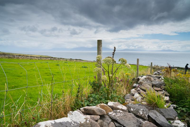 Coastal County Kerry along Wild Atlantic Way scenic tourist drive, rock wall fences across green fields royalty free stock images