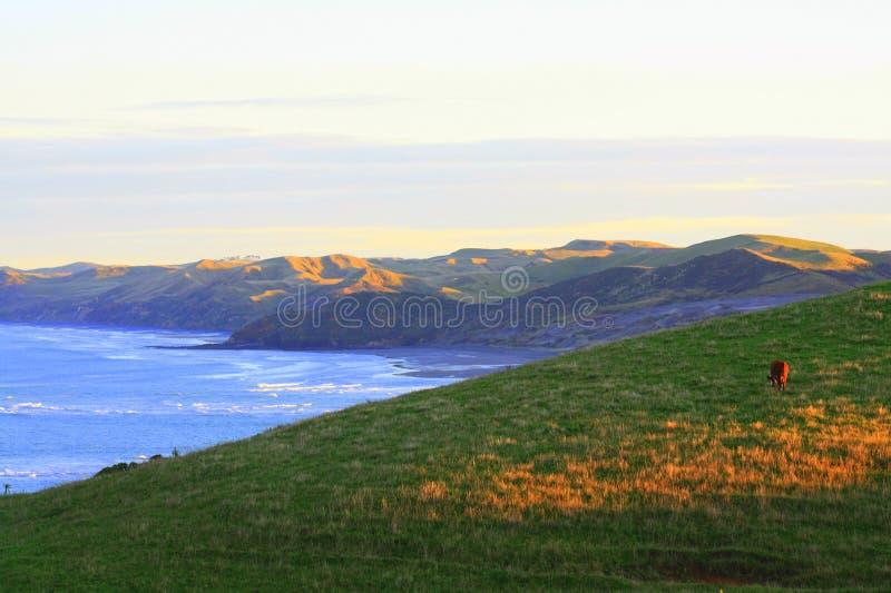 Coastal dawn stock photo
