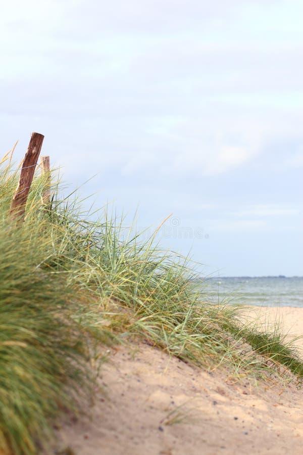 Download Coastal dune stock image. Image of fence, ocean, grass - 30921987
