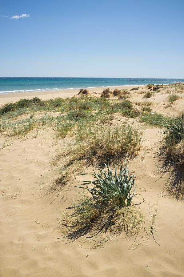 Coastal dunes royalty free stock images