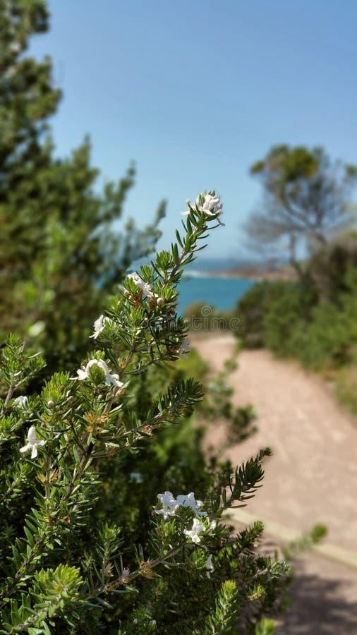 Coastal flowers stock photos