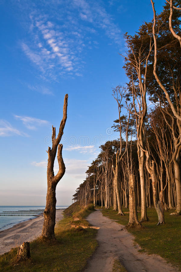 Download Coastal Forest stock image. Image of holiday, pomerania - 20537013