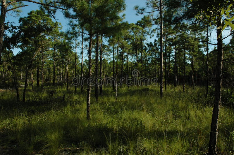 Coastal Forest royalty free stock images