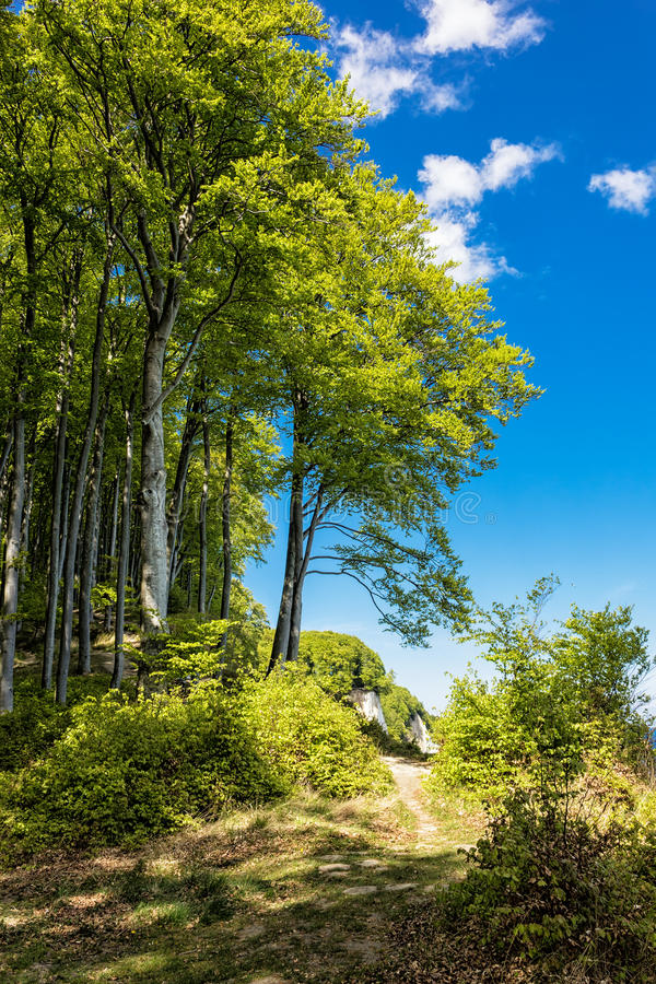 Download Coastal forest stock photo. Image of national, holiday - 40549356