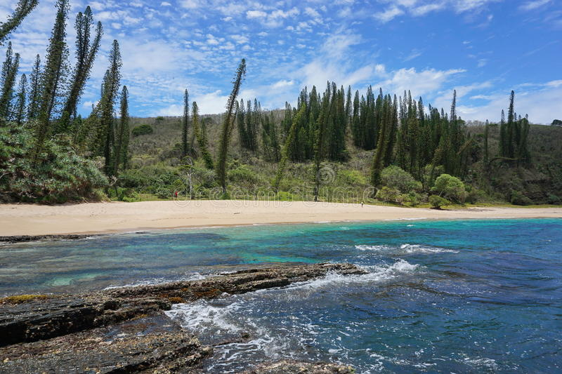 Coastal landscape beach endemic pine New Caledonia stock image