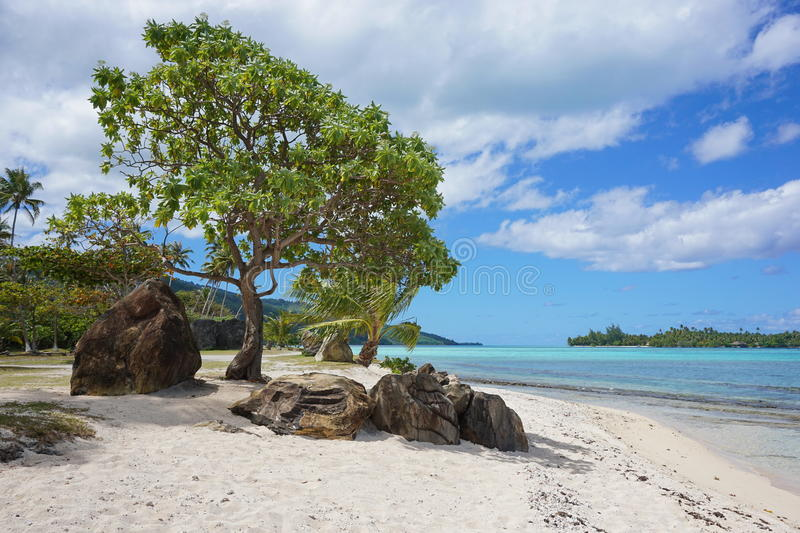 Coastal landscape beach with rock French Polynesia. Coastal landscape, sandy beach with rocks and tree on the south of Huahine island, French Polynesia, Pacific royalty free stock photos
