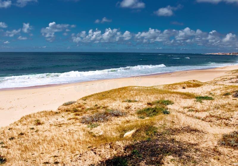 Coastal landscape with plants and blue sky stock photos