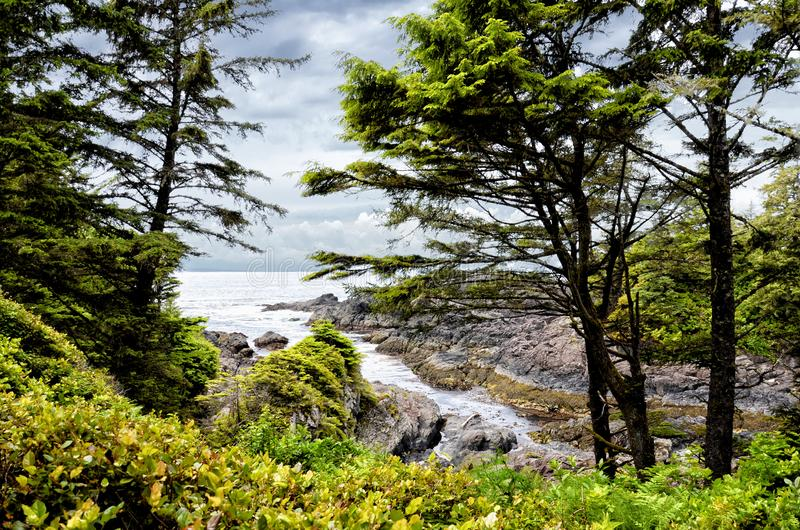 Coastal Landscape of Wild Pacific Trail: Trunks of evergreen pine trees against the backdrop of the sea bay and amazing clouds royalty free stock photography