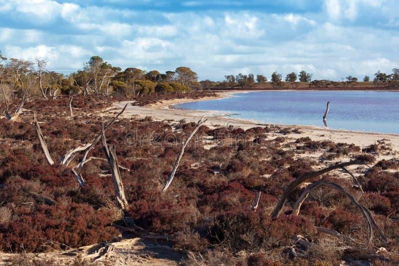 Coastal native Australian bush on the shores of pink salt Lake K stock images