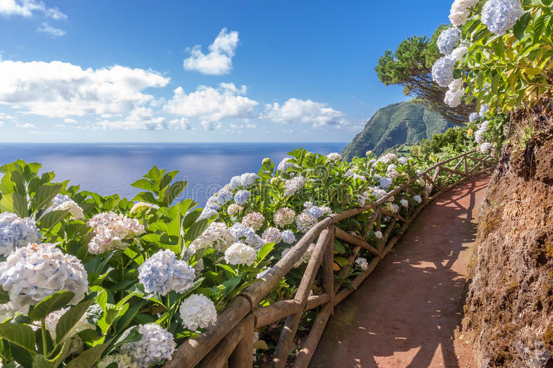Coastal path with hydrangea in Sao Miguel. Azores Islands stock photos