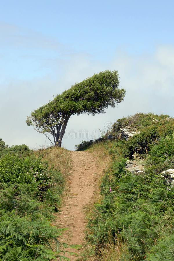 Coastal Path, South Devon. This is a section of the coastal path between East Portlemouth and Gara Rock near Salcombe in Devon, southern England, UK, with an stock photography