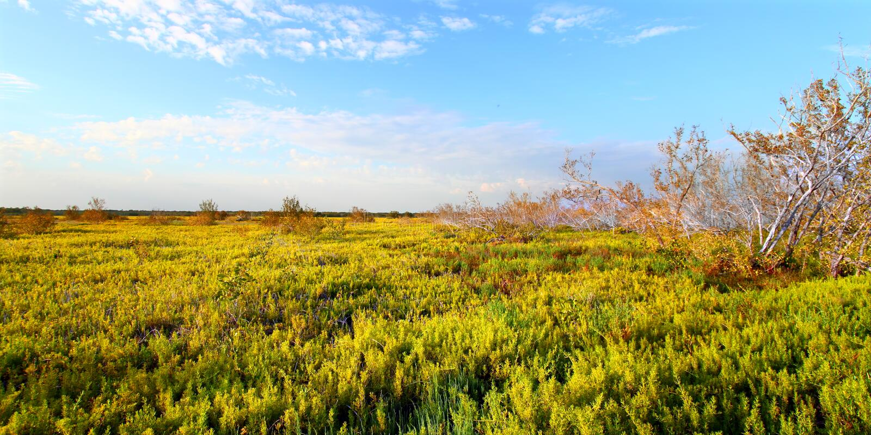Coastal Prairie Landscape Everglades royalty free stock photography