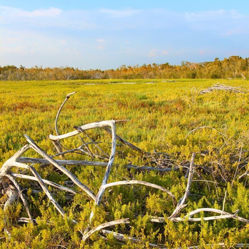 Coastal Prairie Landscape Everglades royalty free stock photos