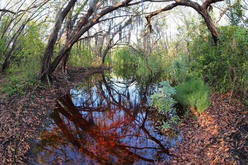 The Coastal Prairie Trail in Everglades National Park. stock image