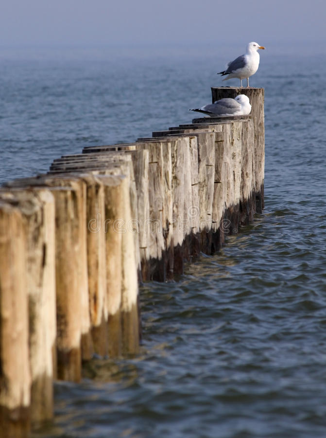 Free Coastal Protection 01 Stock Images - 18377304
