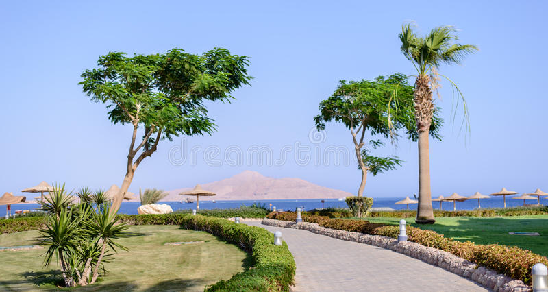 Coastal road on a tropical resort. Coastal road on the formal grounds of an upmarket tropical resort leading to the ocean for an idyllic summer vacation royalty free stock image
