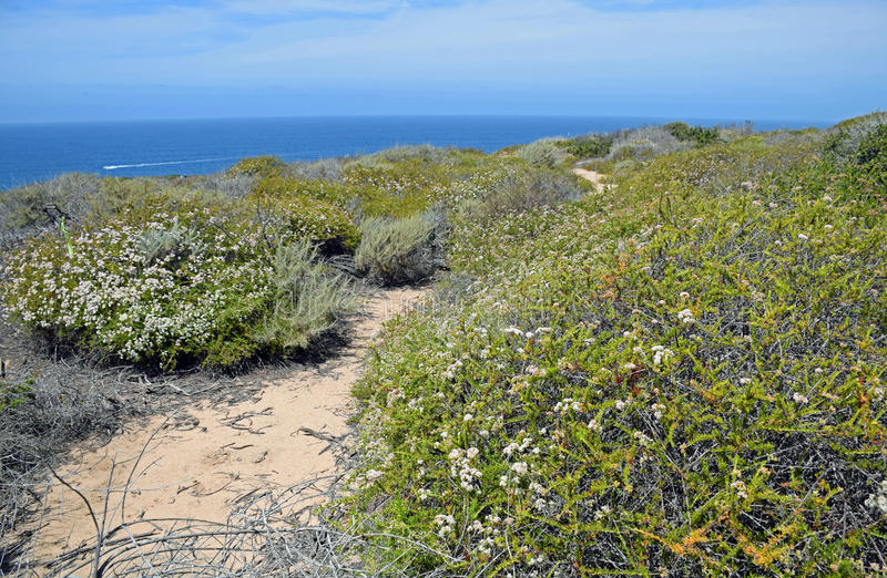 Coastal Sage Community in the Dana Point Headlands Conservation area.. stock photography