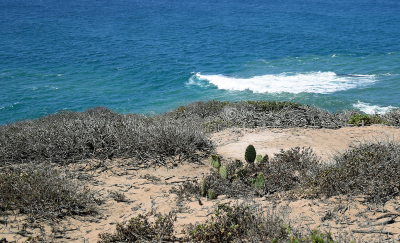 Coastal Sage Community in the Dana Point Headlands Conservation area.. royalty free stock photography