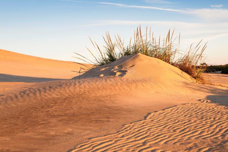 North Carolina Coastal Sand Landscape. Coastal sand, ripples, dune and grass background of Jockeys Ridge on the Outer Banks of North Carolina royalty free stock photo