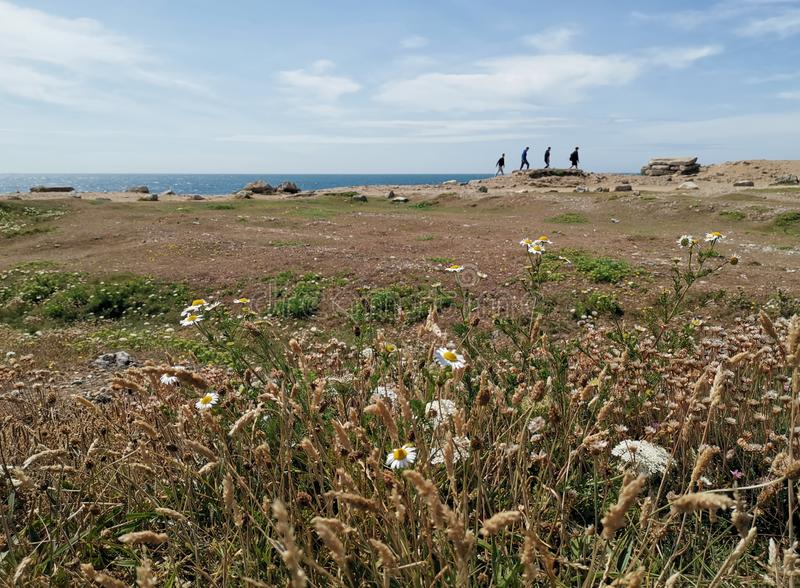 Coastal scene with four walkers. Hdr, ocean, scenery, blue, flowers, seashore, portland, water, rocks, rocky, clifs, cliffs, rugged, grass, daisys, grasses stock photography