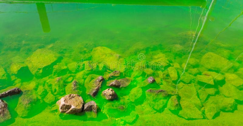 Coastal sea waters are painted with green paint. Ecological poll. Ution royalty free stock photography