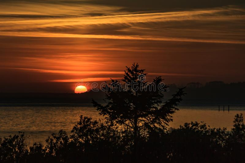 Coastal sunset behind pine trees. Orange coastal sun setting behind pine trees stock image