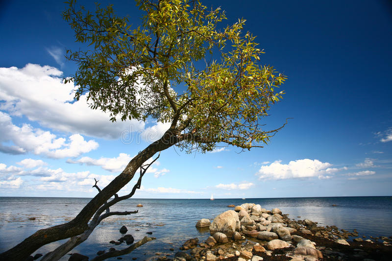 Download Coastal Sweden stock photo. Image of sweden, stones, colour - 21924886