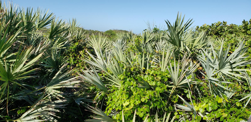 Coastal Tropical Landscape royalty free stock photo