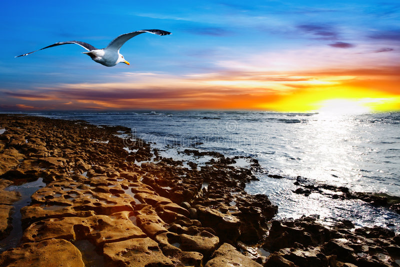 Coastal view. With flying seagull royalty free stock photography