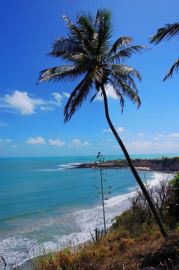 Download Coastal view stock image. Image of ocean, coastal, trees - 7137075