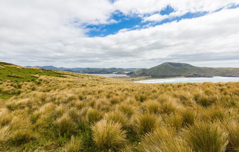 Coastal view from top of the mouintain. New Zealand, Otago Peninsula stock photo