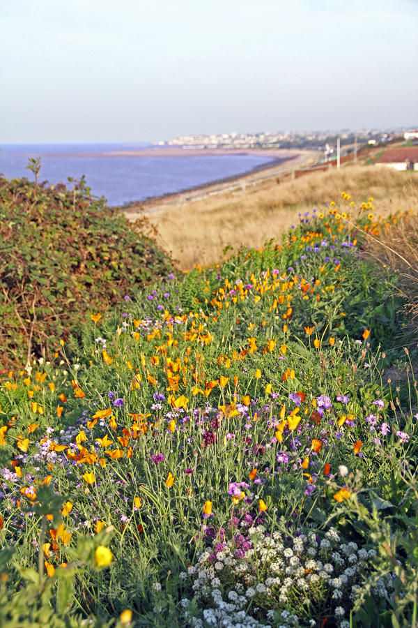 Download Coastal wild flowers stock photo. Image of coast, meadows - 34088328