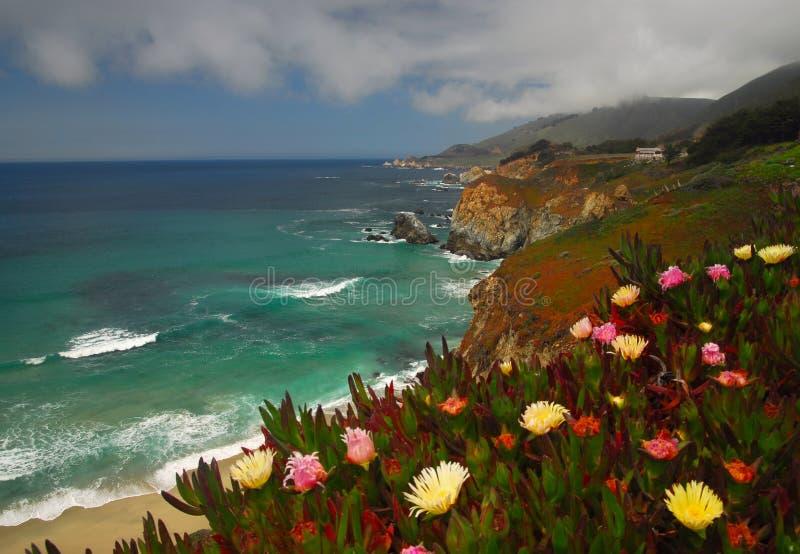 Coastel Flowers stock images