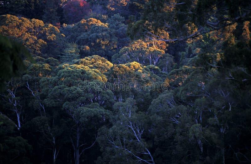 Coastline Australia_. Forest at Sydney NSW Coastline Australia royalty free stock images